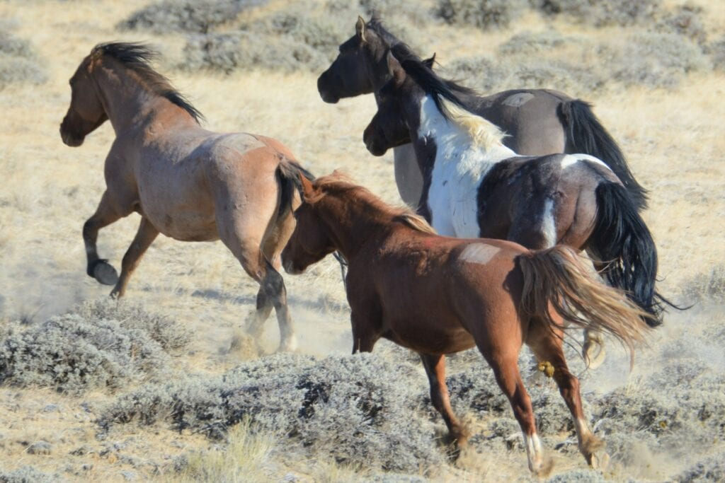 Photos Bad Weather Slows Efforts To Remove 2 400 Wild Horses From Red Desert In Wyoming Casper Wy Oil City News